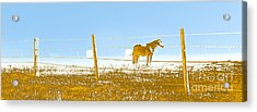 Horse Pasture Revblue Acrylic Print by Paulette B Wright