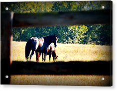 Acrylic Print featuring the photograph Horse Photography by Peggy Franz