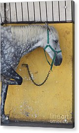 Acrylic Print featuring the photograph Horse  by Rogerio Mariani