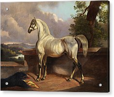 Horse Acrylic Print by Rudolph Swoboda