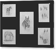 Acrylic Print featuring the painting Horse Study by Alethea McKee