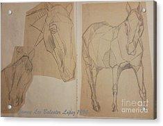 Horse Study Sketchbook Acrylic Print by Jamey Balester