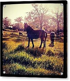 #horse #sunshine #silhouette #sunrise Acrylic Print by Bryan P