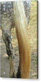 Horse-tale Acrylic Print by Todd Sherlock