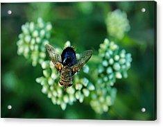 Horsefly No Bother Me Acrylic Print by Beth Akerman