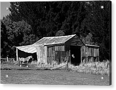 Horses And Old Barn Acrylic Print