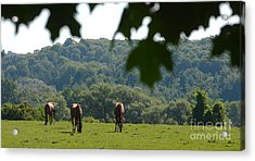 Horses And Summer Breeze Acrylic Print