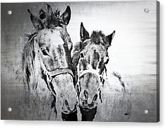 Horses By The Road Acrylic Print by Kathy Jennings