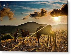 Horses Grazing At Sunset Acrylic Print by Finasteride