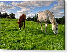 Horses Grazing Acrylic Print by Rob Hawkins