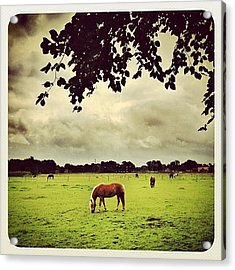 #horses In The Field Acrylic Print