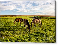 Horses In The Sunset Acrylic Print by Bodo Herold