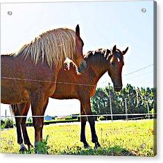 Horses Acrylic Print by Jenny Senra Pampin