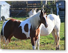 Horses Acrylic Print by Mike Stouffer