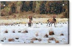 Horses Running Acrylic Print by Odon Czintos