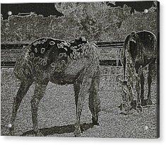Horses Sketch Acrylic Print