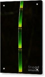 Horsetail  Acrylic Print