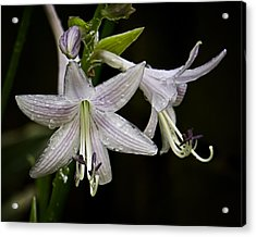 Hosta Front And Center Acrylic Print by Michael Putnam