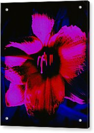 Acrylic Print featuring the photograph Hot by Carolyn Repka