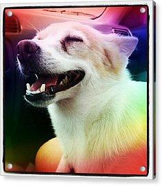 Hot Dog ! #dog #tounge #pet #cute Acrylic Print