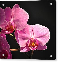 Acrylic Print featuring the photograph Hot Pink Orchids by Ronda Broatch