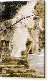 Acrylic Print featuring the photograph Hot Spring Pine by J L Woody Wooden