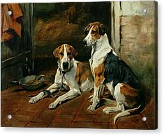 Hounds In A Stable Interior Acrylic Print by John Emms