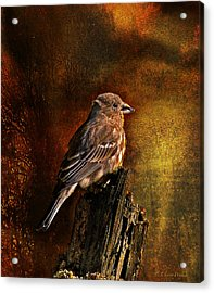 House Finch With Sunflower Seed Acrylic Print