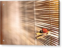 House Of The Rising Ladybug Acrylic Print by Máté Makarész