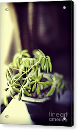 Houseplant Acrylic Print by HD Connelly
