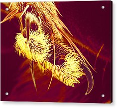 Hover Fly Foot, Sem Acrylic Print by Susumu Nishinaga