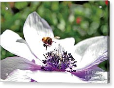 Hovering Acrylic Print by David Taylor