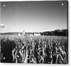 How Corny Acrylic Print by Jan W Faul