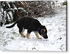 How Does Snow Smell Acrylic Print by Tanya  Searcy