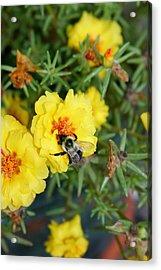 Acrylic Print featuring the photograph Hugging The Flower by Paula Tohline Calhoun