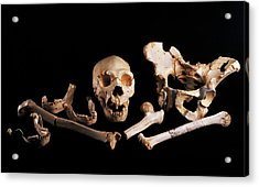 Human Fossils, Sima De Los Huesos Acrylic Print by Javier Truebamsf