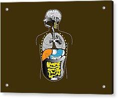 Human Internal Organs, Artwork Acrylic Print by Francis Leroy, Biocosmos
