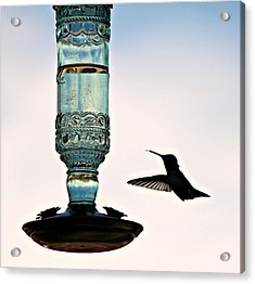 Acrylic Print featuring the photograph Hummer At The Feeder by Jo Sheehan