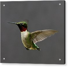 Acrylic Print featuring the photograph Hummingbird 1 by John Crothers