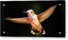 Acrylic Print featuring the photograph Hummingbird  by Albert Seger