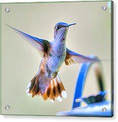 Hummingbird At The Feeder Acrylic Print by Shirley Tinkham