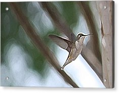 Acrylic Print featuring the photograph Hummingbird by Donna  Smith