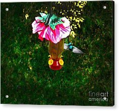 Hummingbird Early Visit Acrylic Print by Al Bourassa