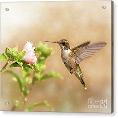 Hummingbird Hovering Acrylic Print by Sari ONeal