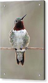 Hummingbird Acrylic Print by Juergen Roth
