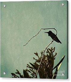 Hummingbird On Winter Wisteria Acrylic Print