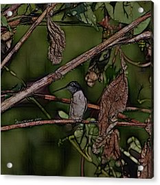 Acrylic Print featuring the photograph Hummingbird Waiting For Dinner by EricaMaxine  Price