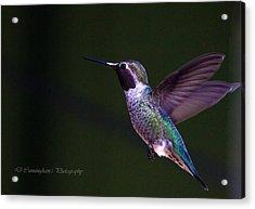 Hummingbird's Visit Acrylic Print