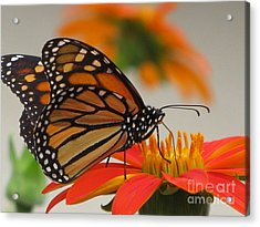 Acrylic Print featuring the photograph Hungry by Tina Marie