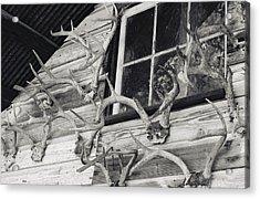Hunters Deer Horns On Shed Acrylic Print